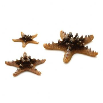 Oase Biorb Sea Stars Set
